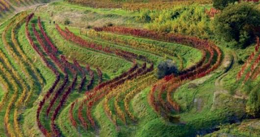 VITISDB: the database of the Italian vines