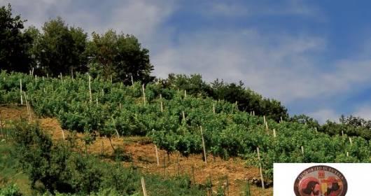 Moscato di Scanzo: the magic of wine squenziata in 23 genes