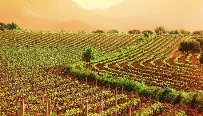 VIVA Sustainable Wine: eco-sustainable wine at Vinitaly