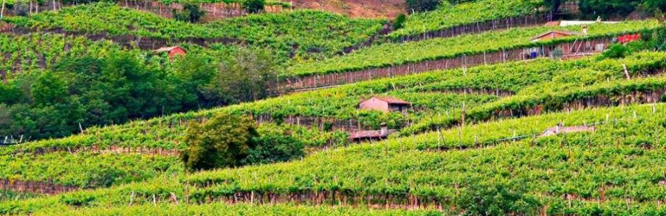 """Recioto di Soave """"Il Sigillo"""": a wine for Oscar"""