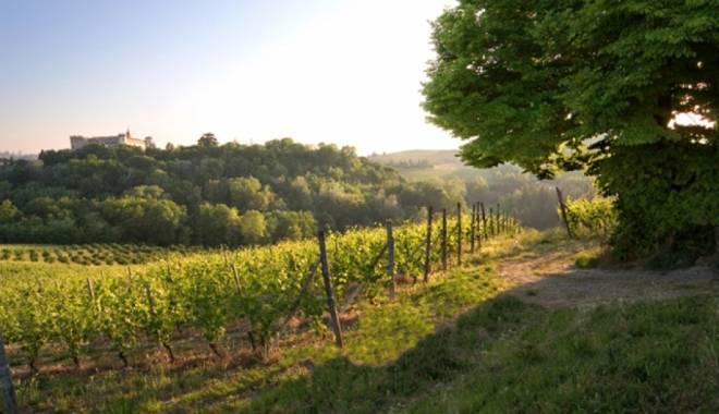 Custoza e Altra Garganega in 100 wines