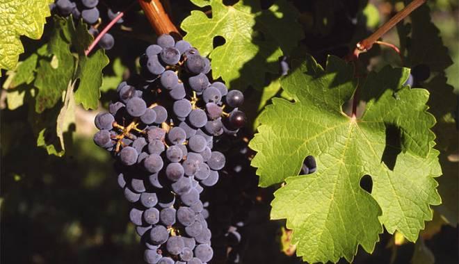 Vinitaly 2014: VinitalyBio dedicated to organic wine with certification