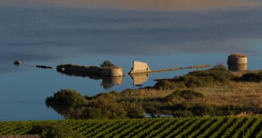 "Heroic viticulture: Favignana, the new ""native"" vineyard"