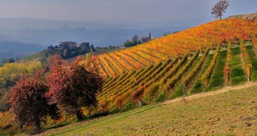 Barolo and Barbaresco: the MeGa for the promotion vineyard to vineyard