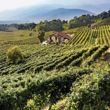 Azienda Agricola Drusian Francesco Cantine Valdobbiadene