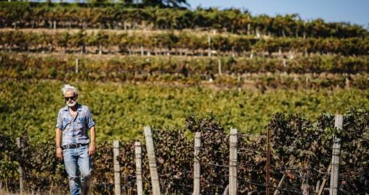 Marco Simonit Italiani do you want to work in the vineyard?