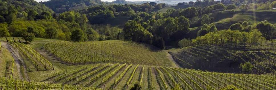 Asolo Prosecco starts the new hill cru plan
