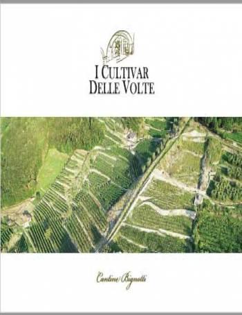 catalogo-The Cultivars of the Times Luscietti farm Cantina Bignotti