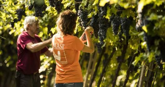 Masi Harvest 2020 Investors are also harvesting with Masi