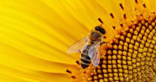 VENETO FRIULI VG SLOVENIA BEE DIVERSITY AN INTERREG SAVES BEES AND BIODIVERSITY