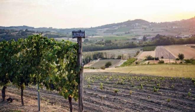 Monferrato del vino resists