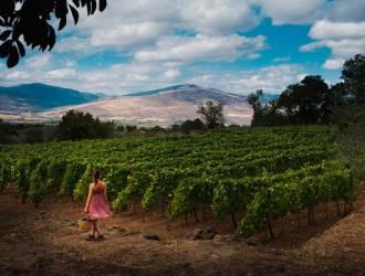 Spumante Etna DOC a double-digit growth