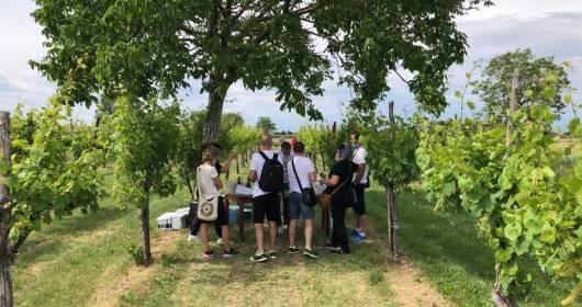 The vineyard? Natural