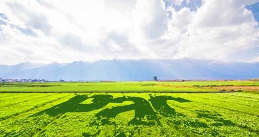 Confagricoltura Piemonte intervenes on the CAP reform
