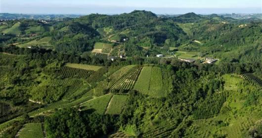 IL ROERO PROPOSES VINEYARDS FREE OF WEEDING