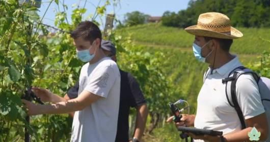 Noviagri field test - Consorzio Barbera d'Asti